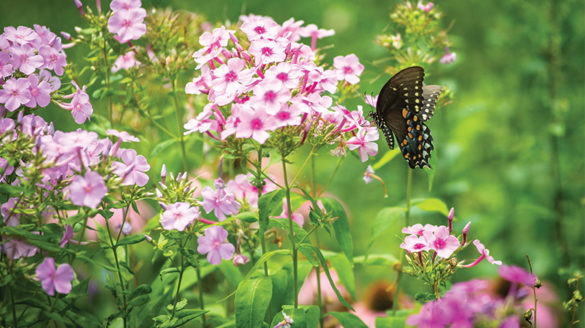 Flowers and butterfly in the garden of the Sisters of St. Joseph in Brentwood, N.Y.