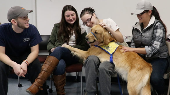 SJC Long Island students playing with a dog during finals week.
