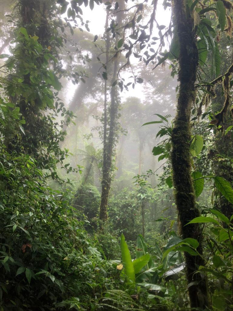 Photo of a rainforest in Costa Rica.