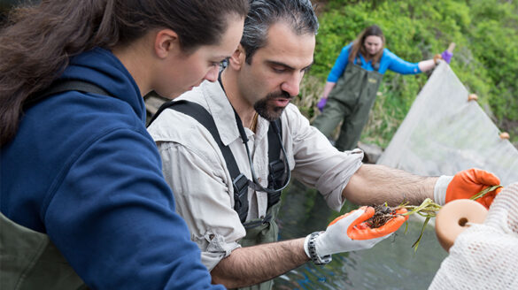 Konstantine Rountos, Ph.D., studying marine life in Patchogue Lake with SJC Long Island students.